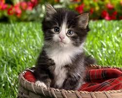 بالصور اجمل صور قطط , اذا كنت من محبي القطط سينال هذا الموضوع اعجابك حتما ! 3348 12