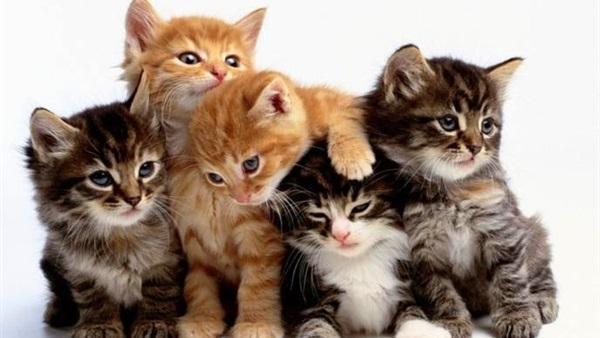 بالصور اجمل صور قطط , اذا كنت من محبي القطط سينال هذا الموضوع اعجابك حتما ! 3348 14