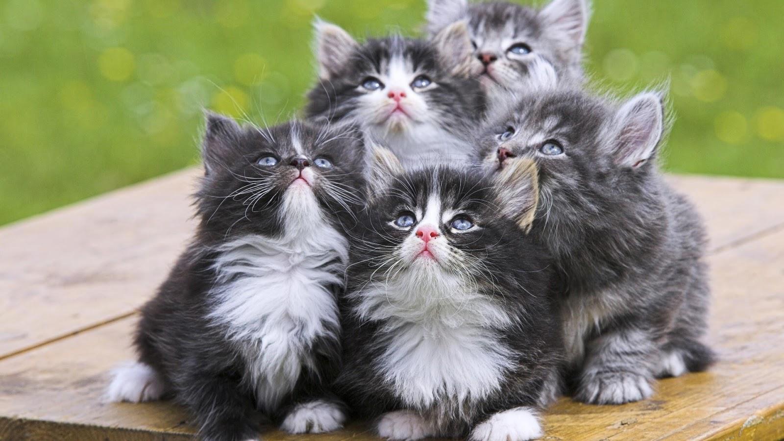 بالصور اجمل صور قطط , اذا كنت من محبي القطط سينال هذا الموضوع اعجابك حتما ! 3348 2
