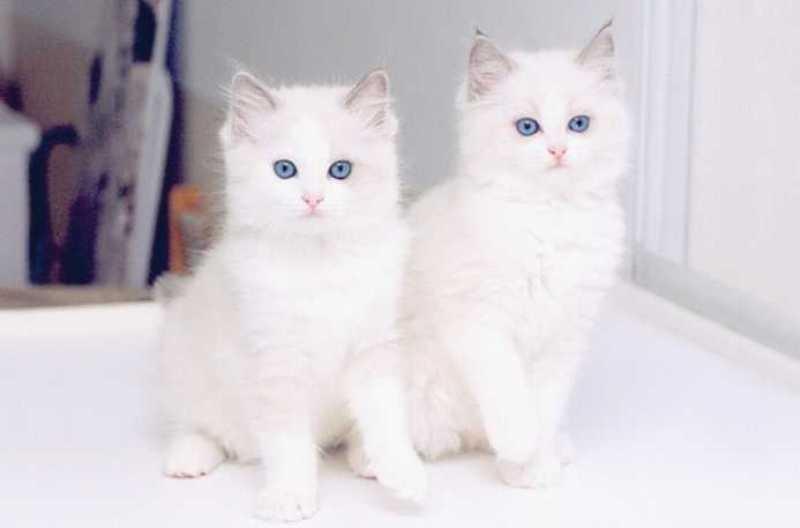 بالصور اجمل صور قطط , اذا كنت من محبي القطط سينال هذا الموضوع اعجابك حتما ! 3348 4