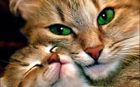 بالصور اجمل صور قطط , اذا كنت من محبي القطط سينال هذا الموضوع اعجابك حتما ! 3348 5