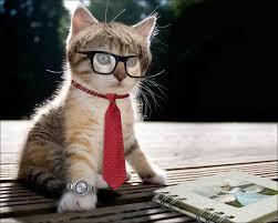 بالصور اجمل صور قطط , اذا كنت من محبي القطط سينال هذا الموضوع اعجابك حتما ! 3348 6
