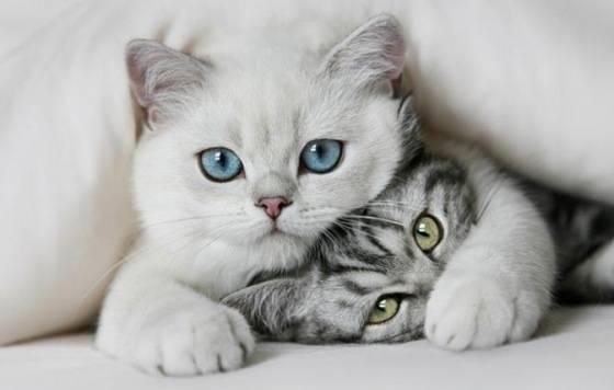 بالصور اجمل صور قطط , اذا كنت من محبي القطط سينال هذا الموضوع اعجابك حتما ! 3348 8