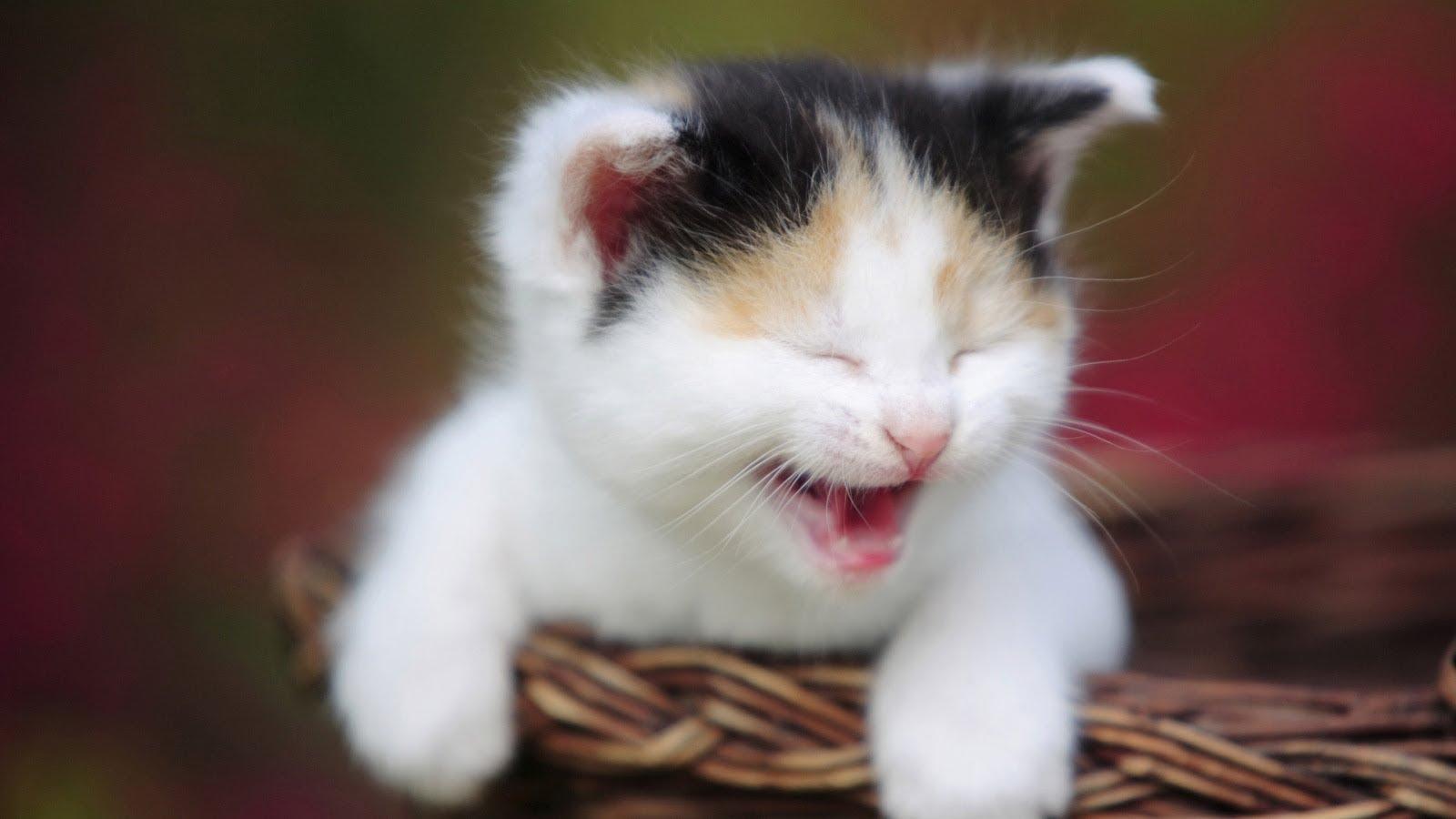 بالصور اجمل صور قطط , اذا كنت من محبي القطط سينال هذا الموضوع اعجابك حتما ! 3348 9