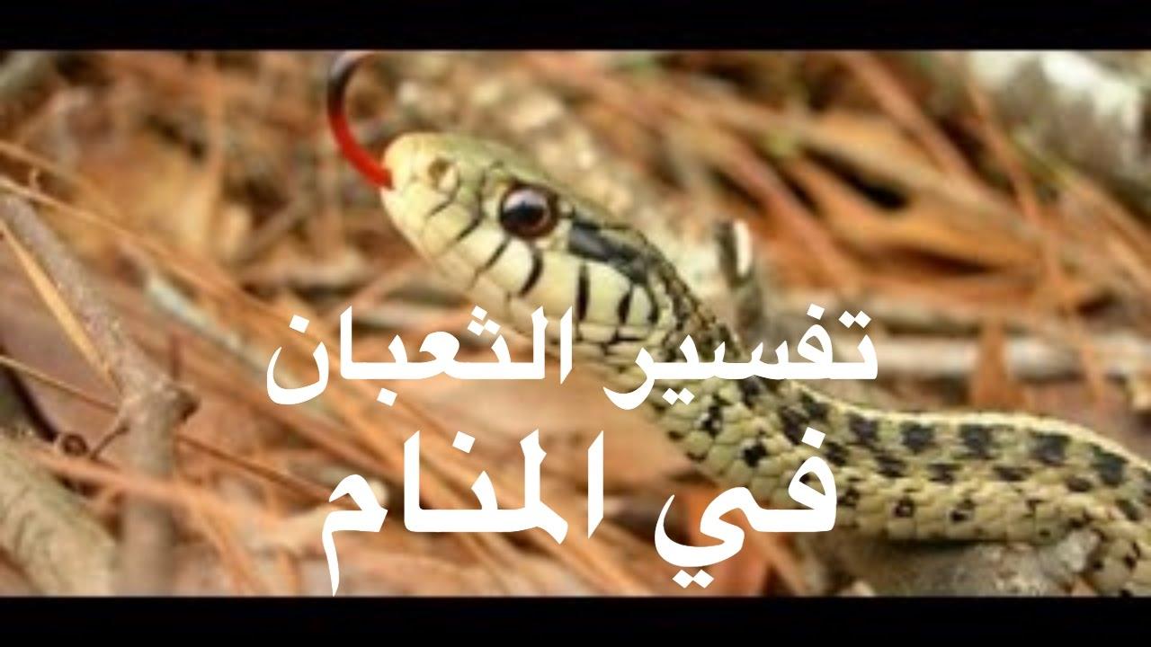 بالصور تفسير رؤية الثعبان في المنام , ماذا تفعل لو رايت ثعبانا في المنام 3384 2