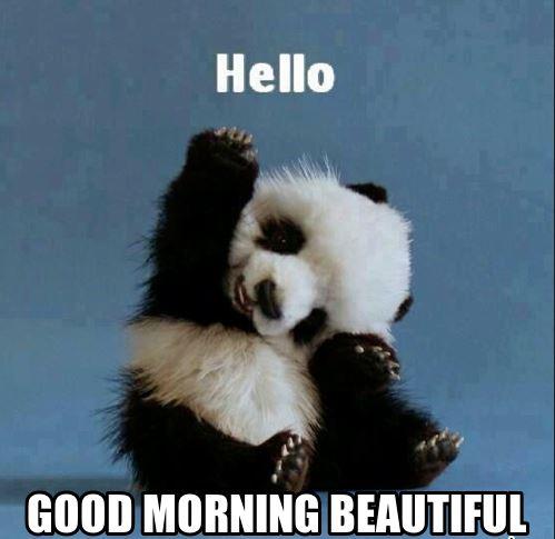 بالصور صباح الخير مضحكة , تحية الصباح بطريقة مختلفة! 3439 6