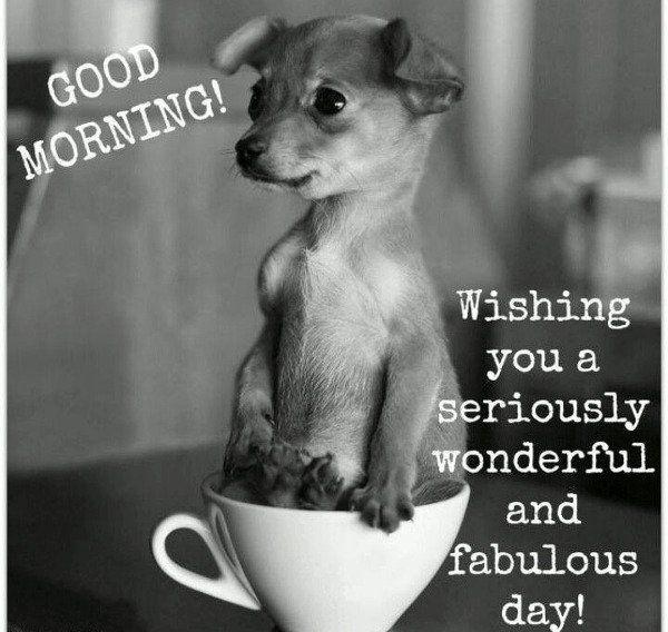 بالصور صباح الخير مضحكة , تحية الصباح بطريقة مختلفة! 3439 7