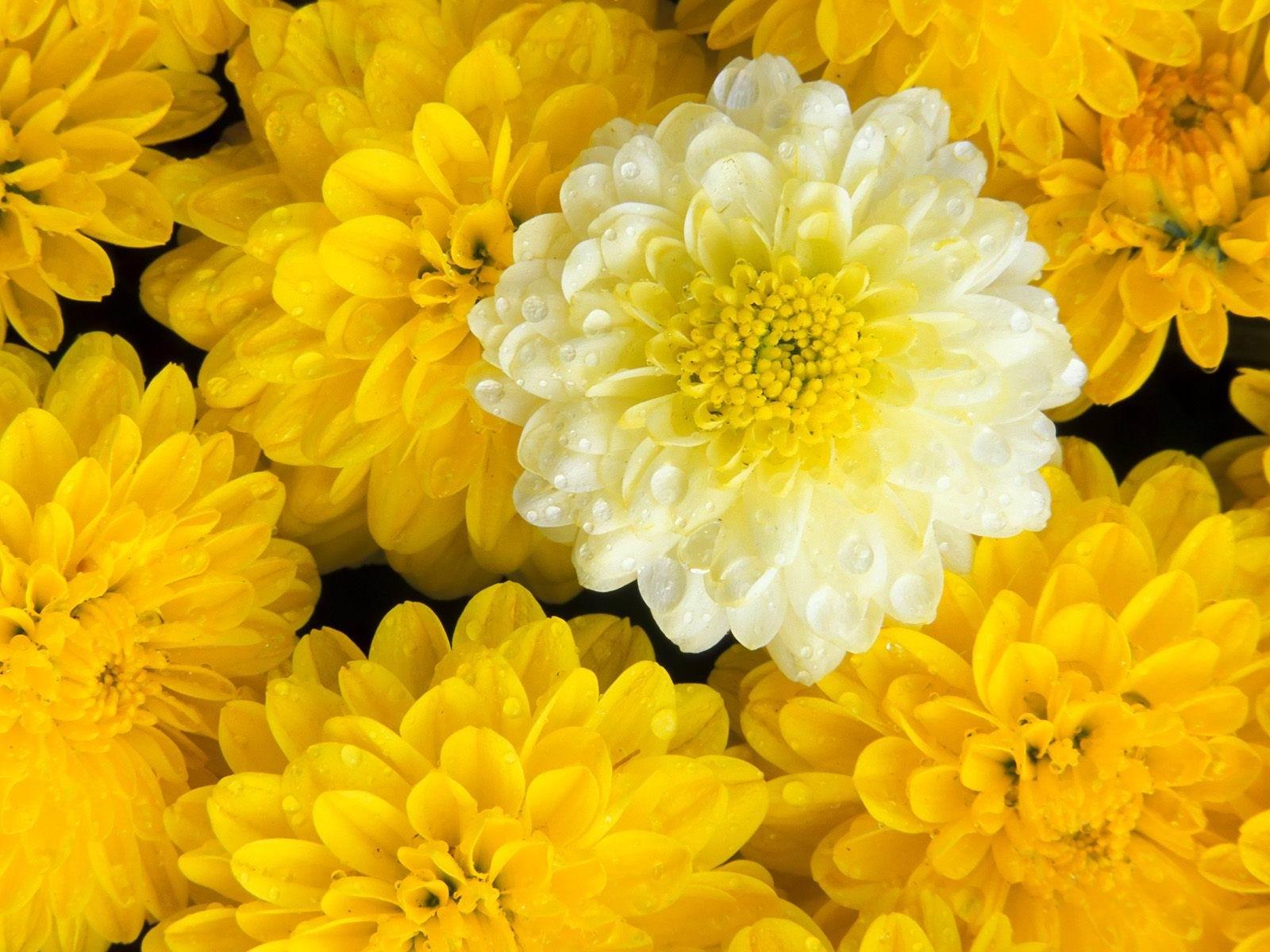 بالصور تحميل صور ورد , صور ورد طبيعي وبلاستيك جميل و اخر شياكة 3536 5