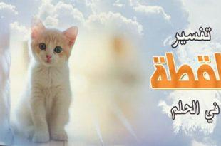 صورة القطط البيضاء في المنام , تفسير حلم القطة البيضاء في الحلم