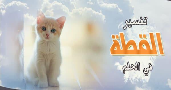 صور القطط البيضاء في المنام , تفسير حلم القطة البيضاء في الحلم