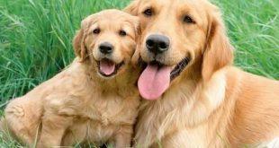صورة انواع الكلاب , اشرس واغرب الكلاب