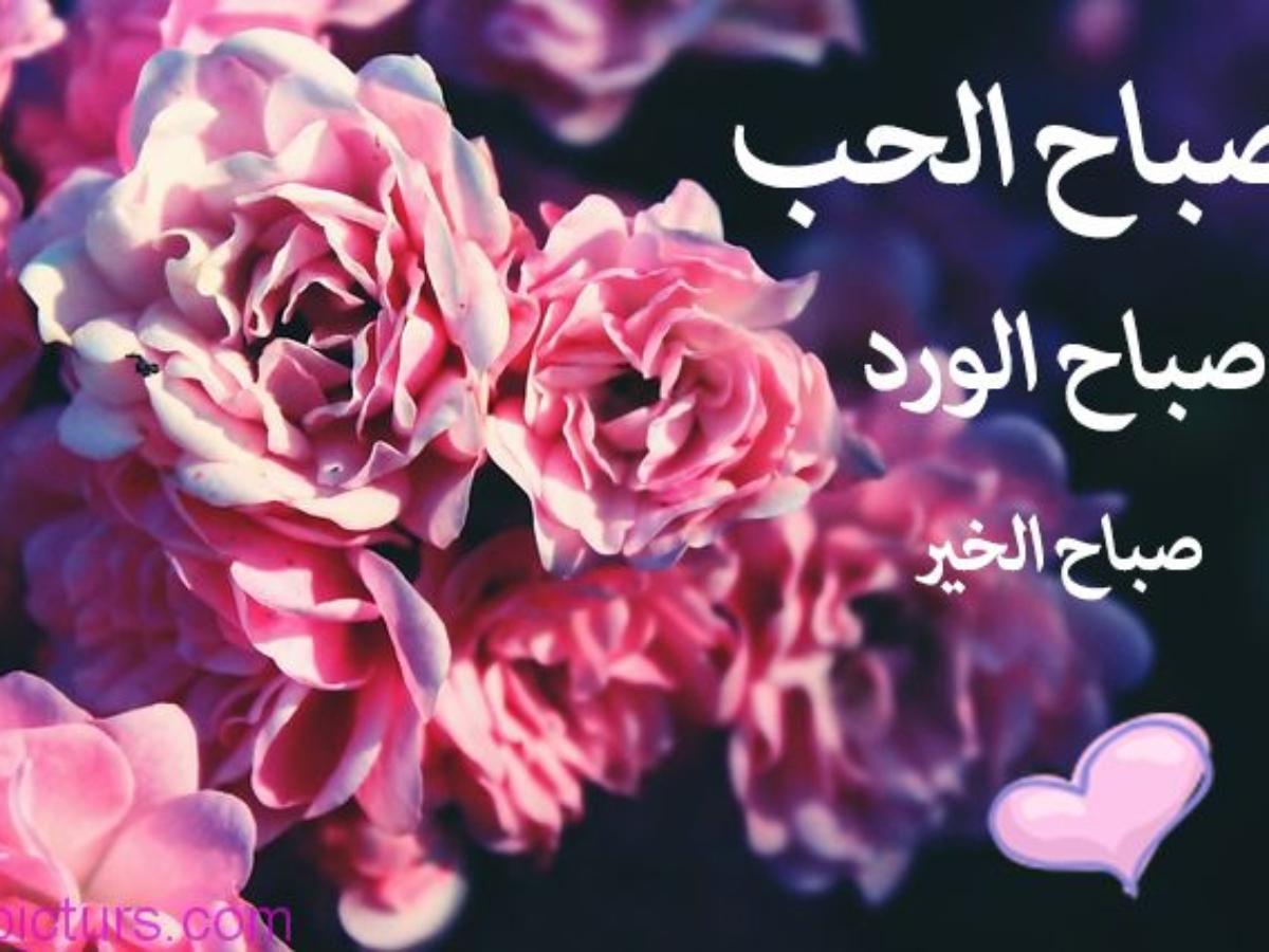 صورة حبيبي صباح الخير كلمات, احلى صباح عليك 725 9