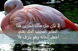 صورة كلام جميل ومعبر ومؤثر, عبارات تمس القلب لها واقع جميل