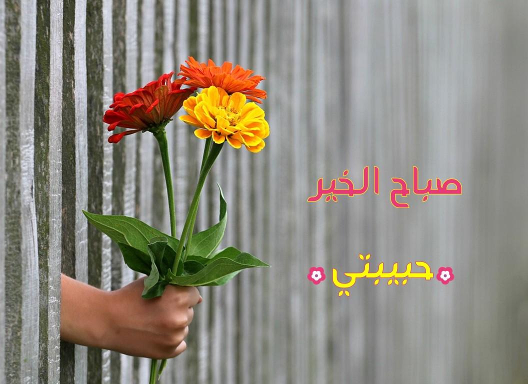 صورة صباح مشرق مع احلى حبيب ,صباح النور حبيبتي 2191 1