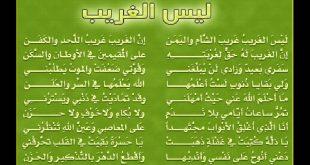 صورة كل الناس بتحبها ,اغاني دينية اسلامية