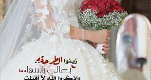 صورة المخمل درة العروس 12640 6 310x165